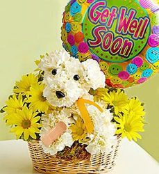 Get well soon dog-blm-sick-dog from Krupp Florist, your local Belleville flower shop