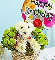 Happy birthday puppy adorpup16-3 from Krupp Florist, your local Belleville flower shop