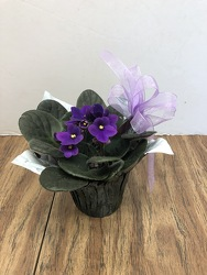 African violet plant-aviolet-01 from Krupp Florist, your local Belleville flower shop