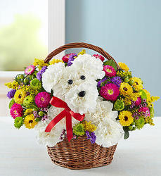 Bloomnet a-DOG-able in a basket from Krupp Florist, your local Belleville flower shop