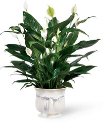 The FTD Comfort Planter from Krupp Florist, your local Belleville flower shop