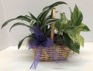 Double basket-small from Krupp Florist, your local Belleville flower shop