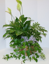 Triple basket-g915-1 from Krupp Florist, your local Belleville flower shop