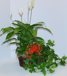 Double plant basket gp15-3a from Krupp Florist, your local Belleville flower shop