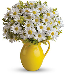 Teleflora's Sunny Day Pitcher of Daisies from Krupp Florist, your local Belleville flower shop