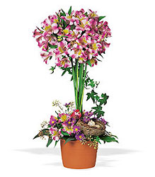 Alstroemeria Topiary from Krupp Florist, your local Belleville flower shop